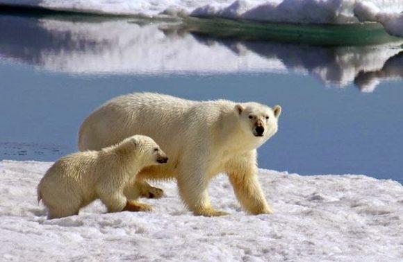Círculo polar ártico